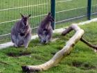 Erlebnisfarm auch mit exotischen Tieren