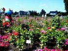 Blütenpracht auf der Halbinsel