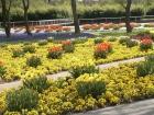 Blumenpracht im Park