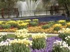 Tulpen auf der Halbinsel