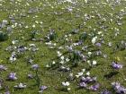 Blumenpracht im Park Frühling