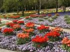 Blütenpracht im Park.